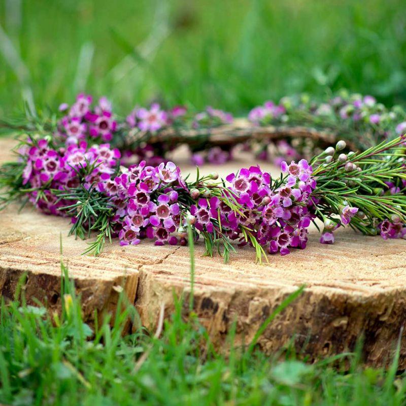 Coronita de Flor de Cera